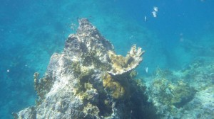 ..fortsetter under vann