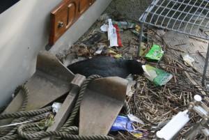 Denn kommer ikke ut i morgen, en sothøne har lagt egg på badeplattformen.